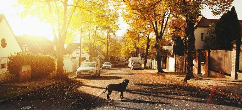 A nice looking neighborhood during fall