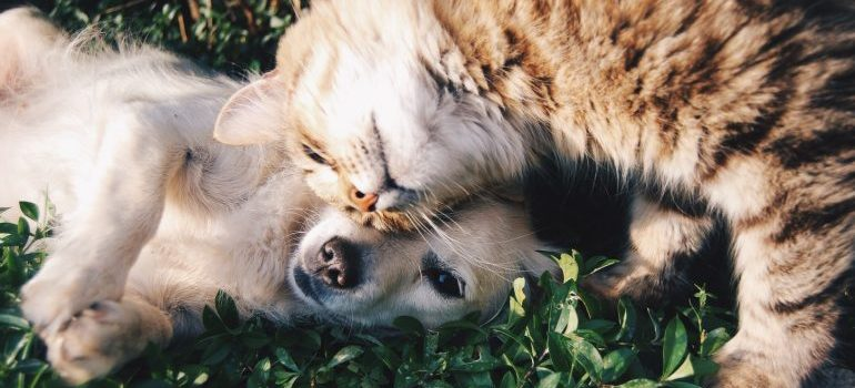 A cat and a dog playing